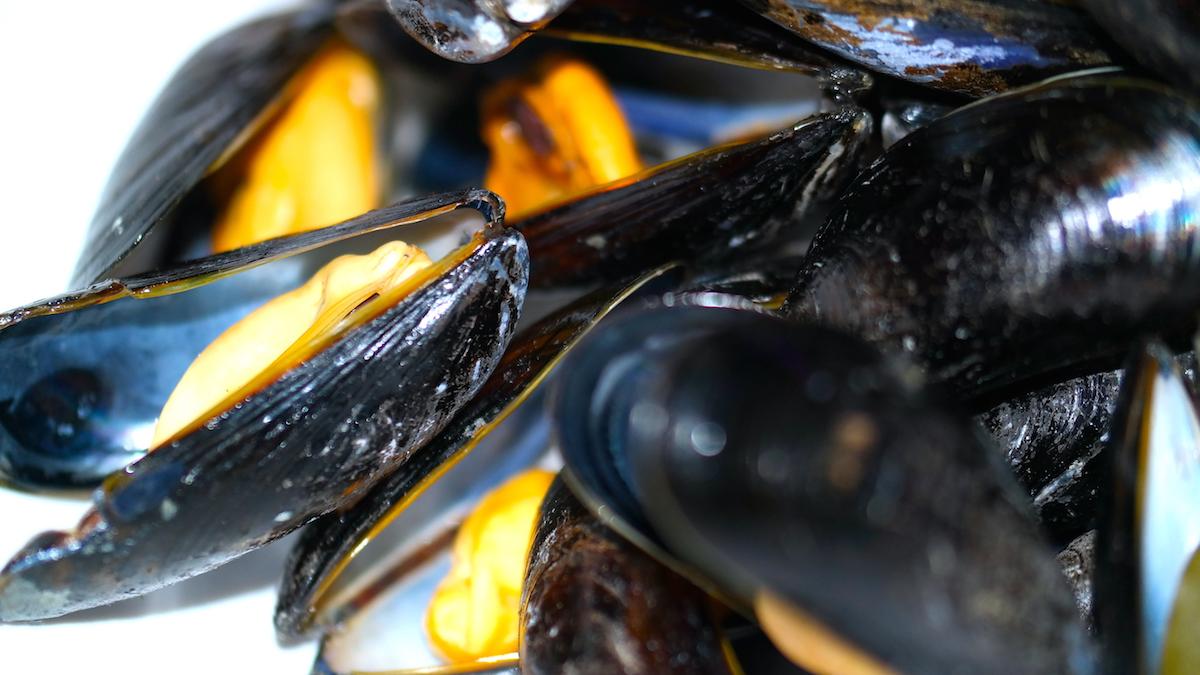 Färska musslor