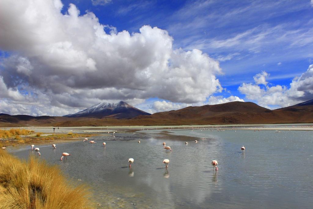 Den sydvästliga delen av Bolivia, där Renate gjorde en tredagars rundtur med bil i vildmarken, flamingos