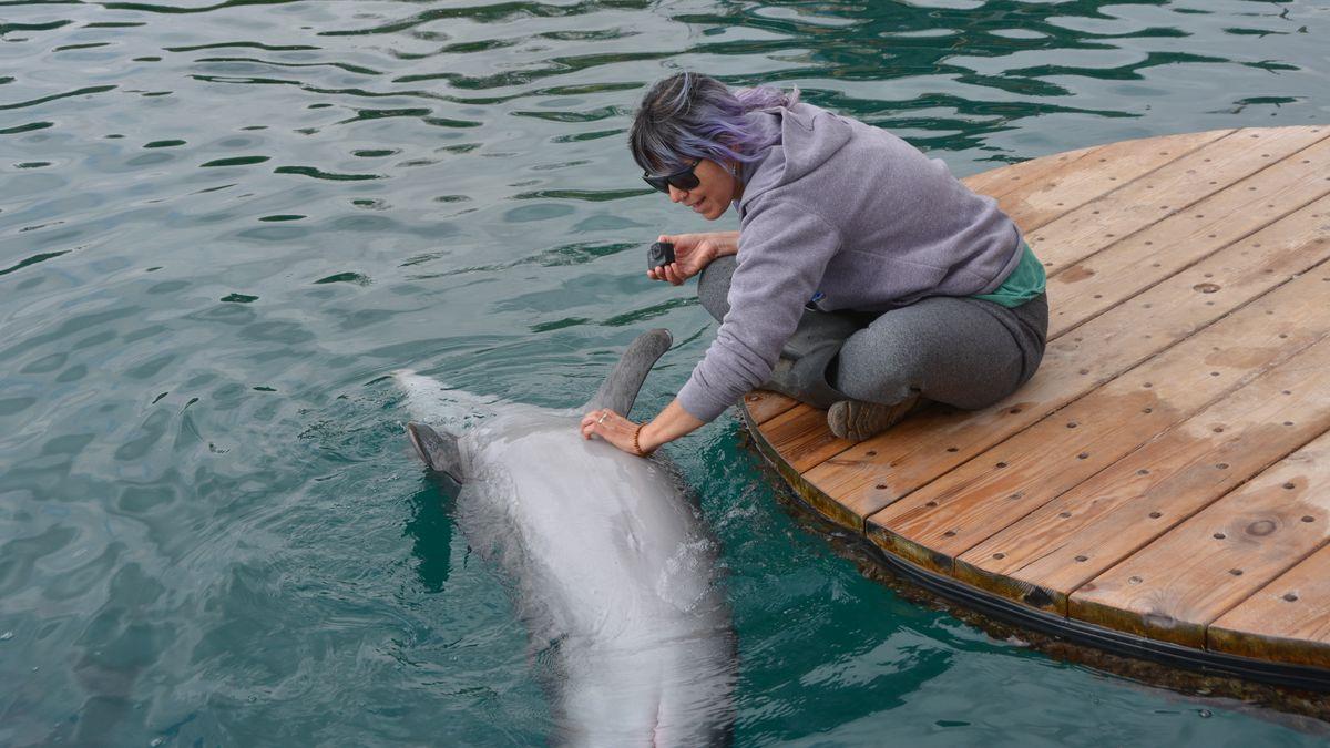 Delfiner Israel