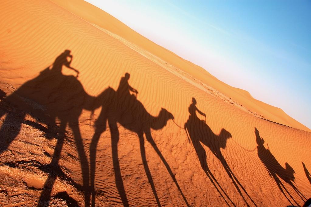 Dromedarerna gjorde långa skuggor i sanden