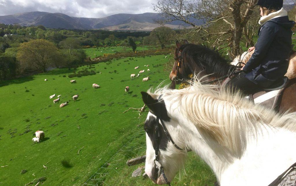 Hästar Irland