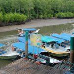 Mangrove båttur