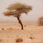 Marockos landskap