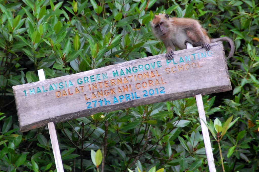 Mangrovetur