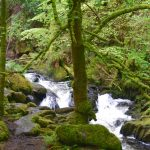 Nationalparken Killarney – och staden Killarney på Irland