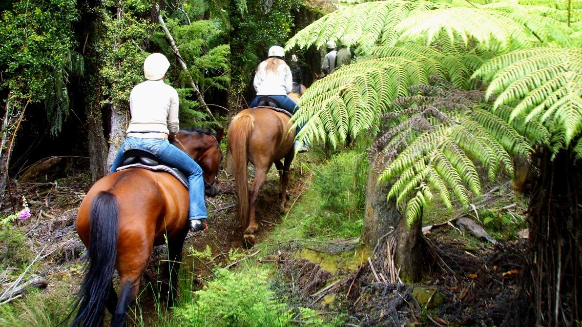 Ridtur i Nya Zeeland 2007
