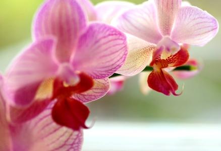 En orkidé som jag fick på min disputation, fotad med macro-objektiv - och ja, man kan komma ännu närmare!