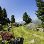 Att uppleva sommar i St Johann in Tirol
