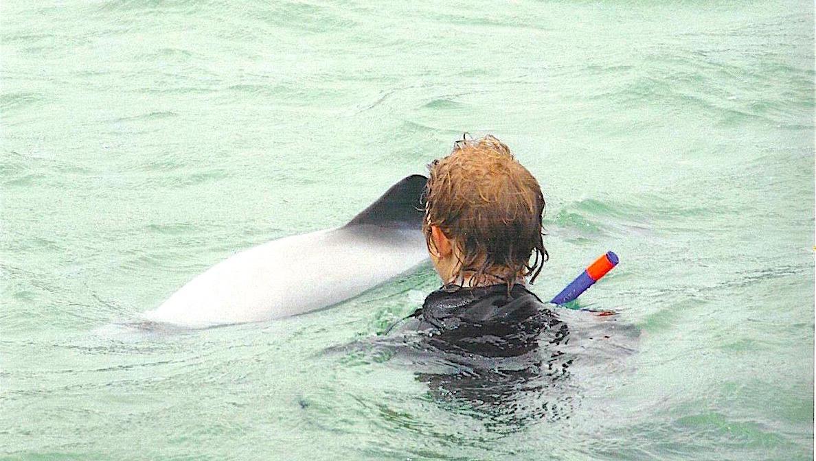Delfiner runt oss