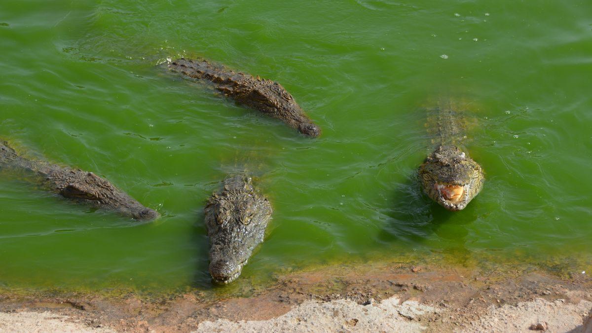 Agadirs krokodilpark
