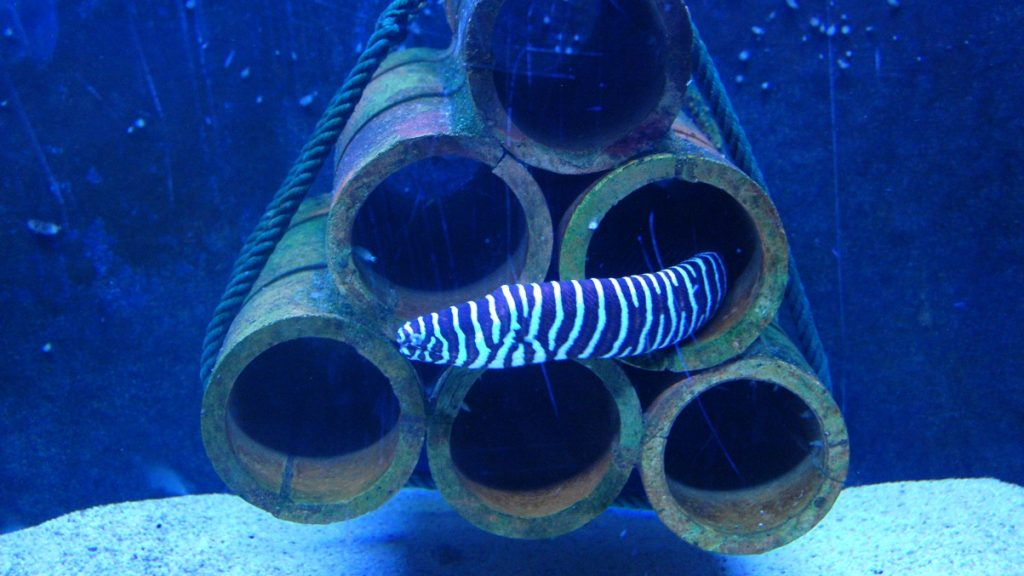 Akvarium Malaysia