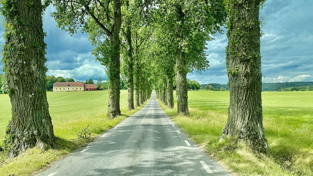 På väg mot Stjärnorps slottsruin - Allé