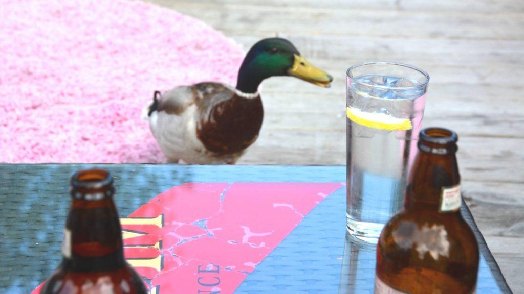 Har ni en öl att bjuda på kanske...?