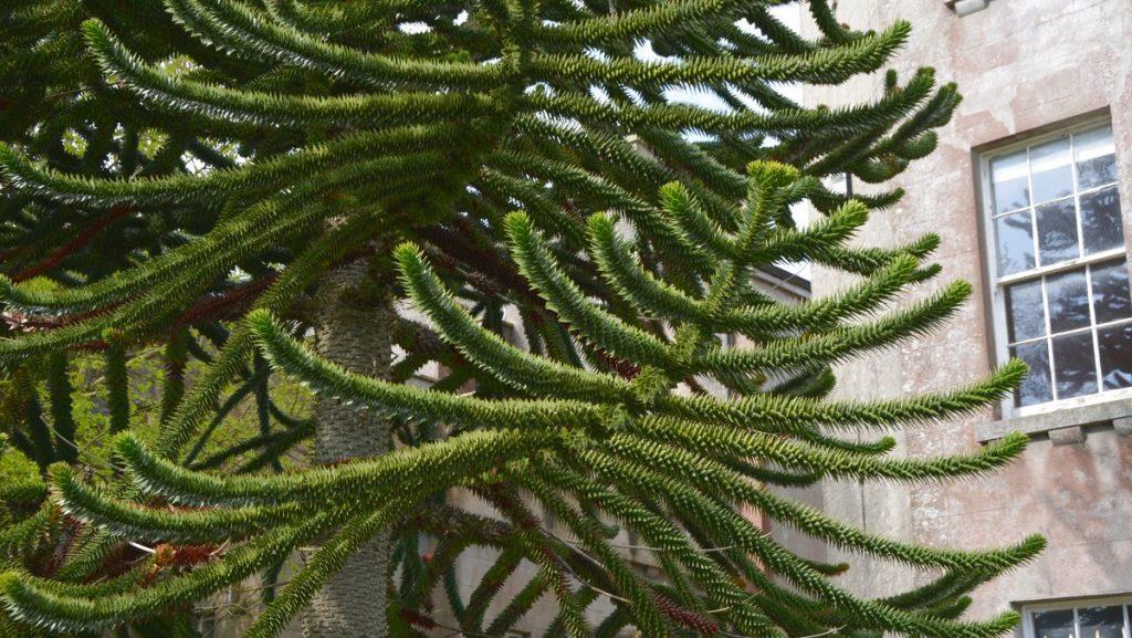 Annorlunda träd