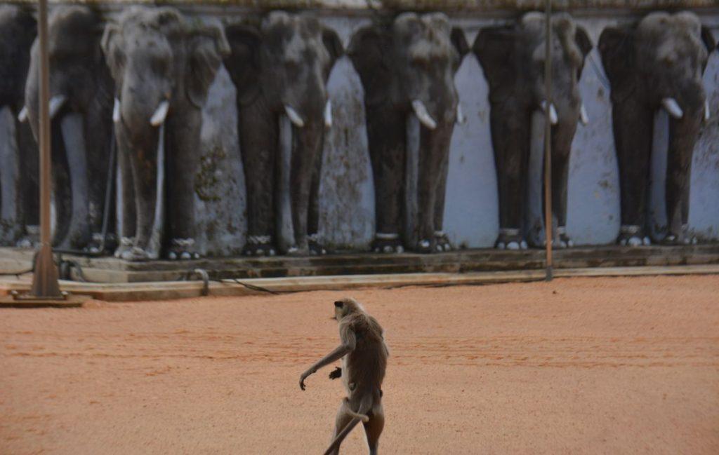 Apa i Anuradhapura