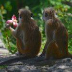 Vågar man resa till Sri Lanka? Ja, ett fantastiskt land!