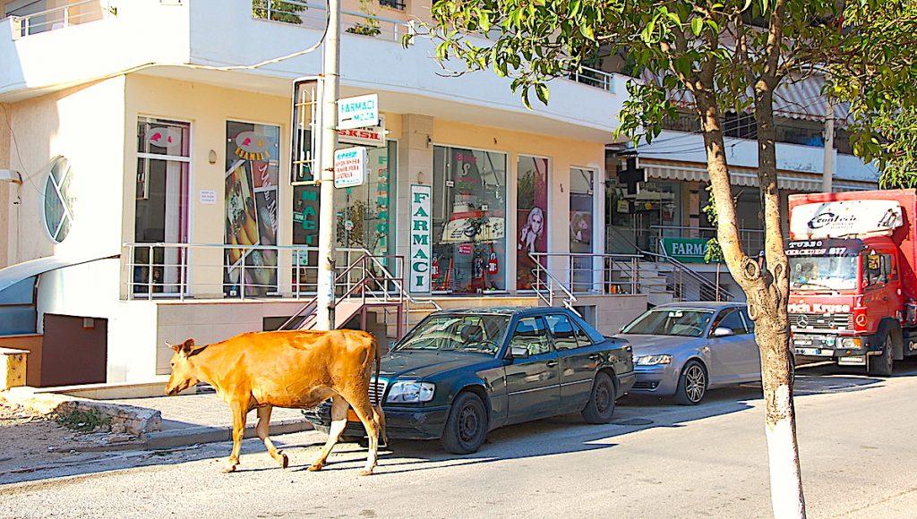 En ko mitt i city