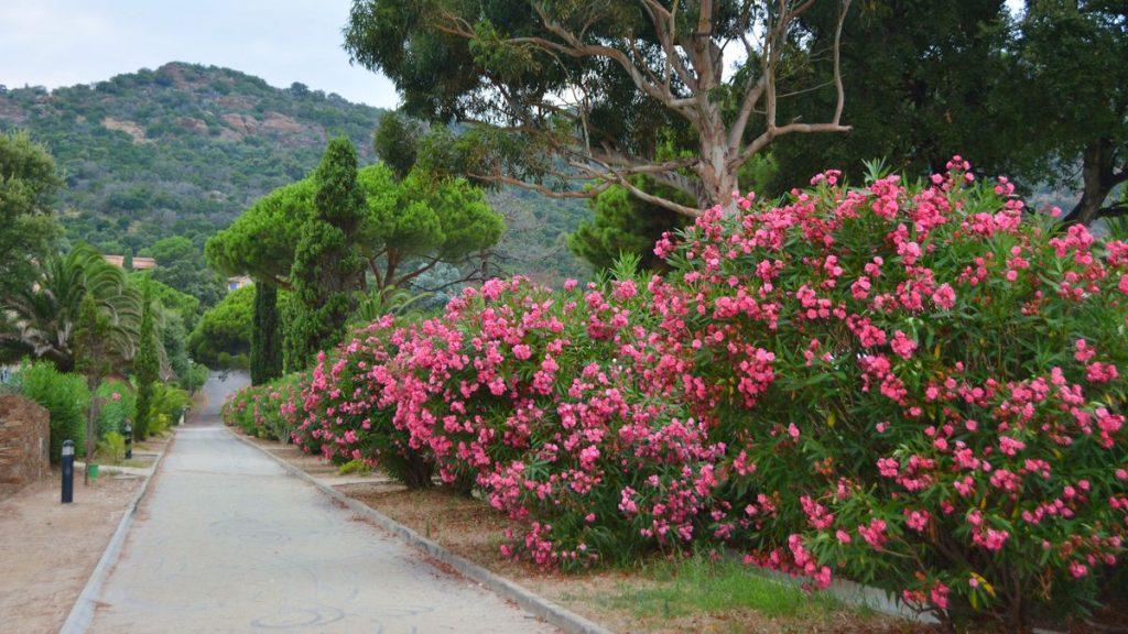 blommor frankrike