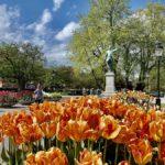Kungsträdgården i Stockholm – och palatset Makalös