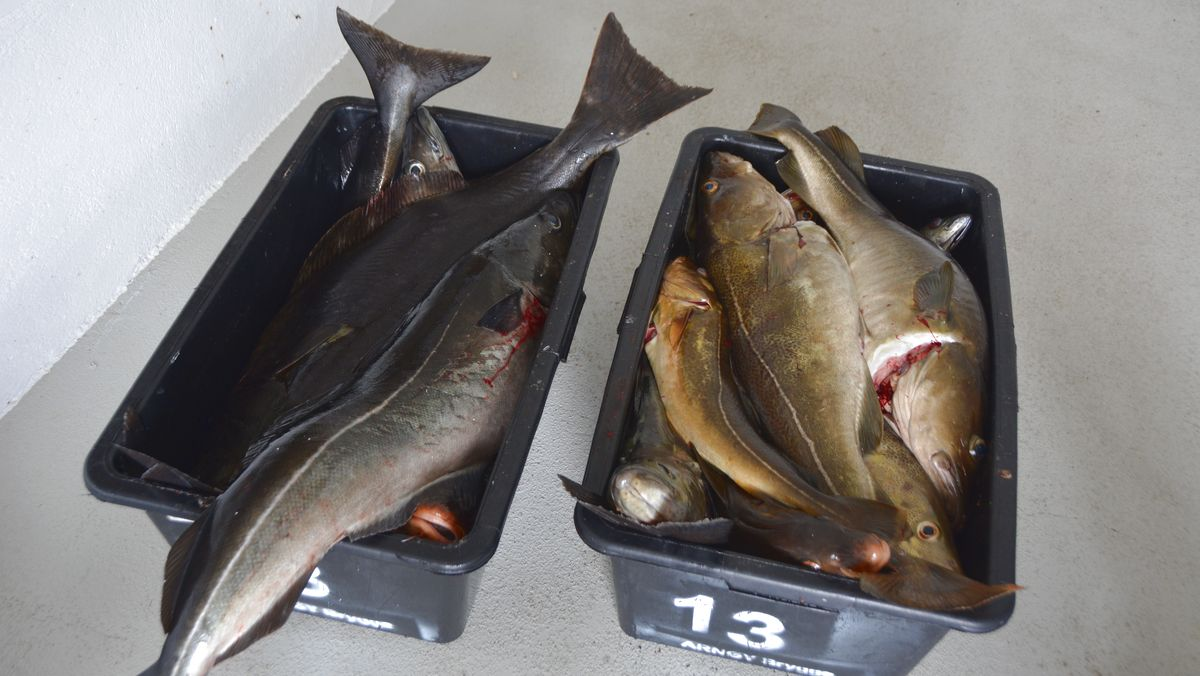 mycket fisk dating Sök