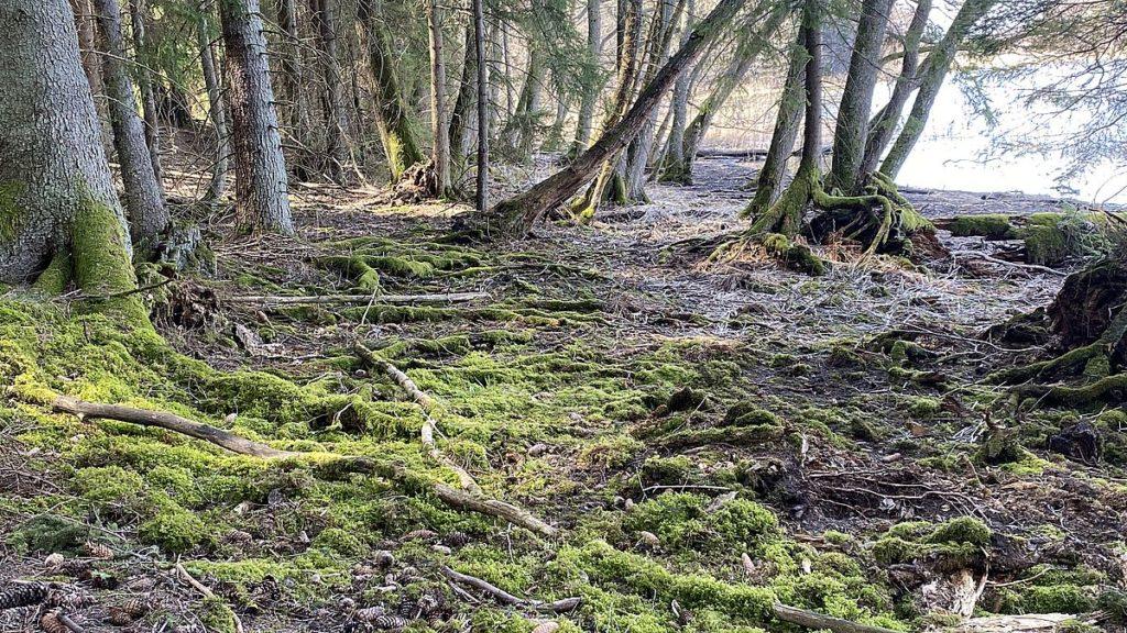 Bogesundslandets naturreservat