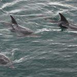 Se delfiner i Eilat på Dolphin Reef