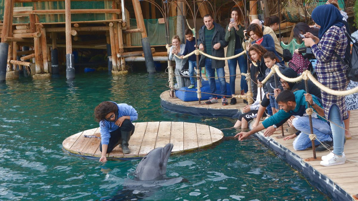 Delfiner Eilat