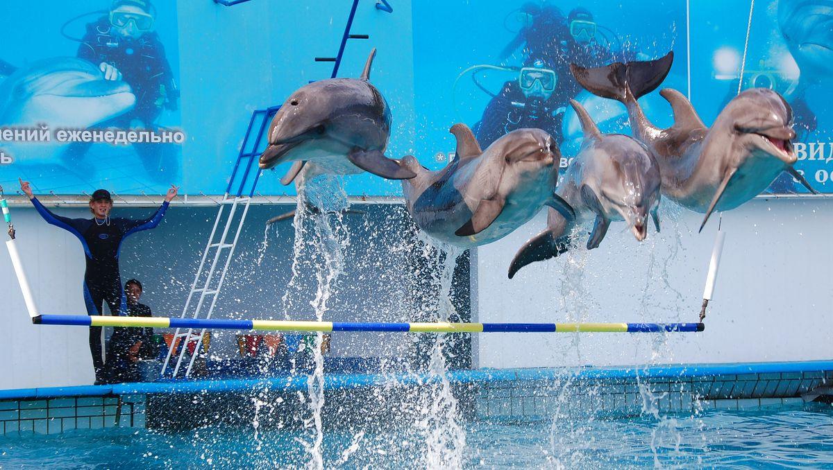 Delfiner Ukraina