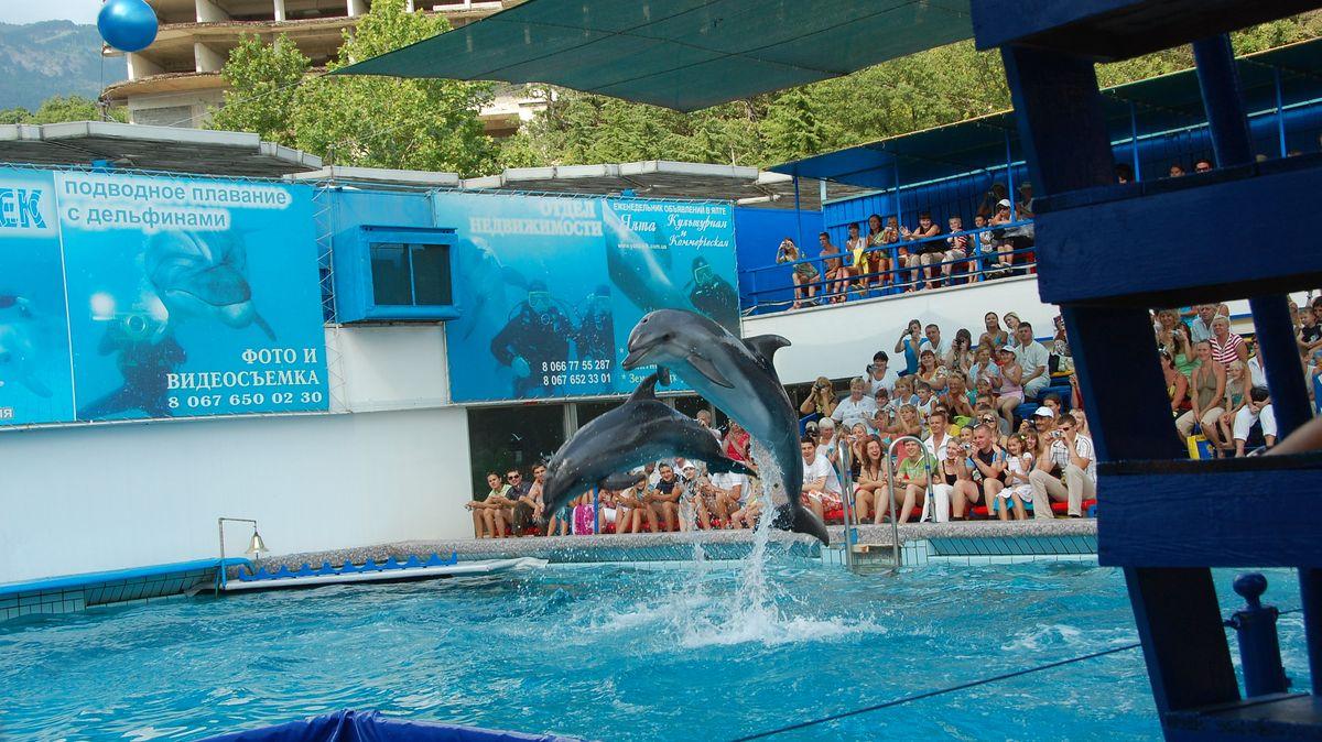 Delfinshow, Krimhalvön