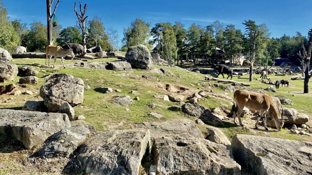 Göra i Borås - djurpark