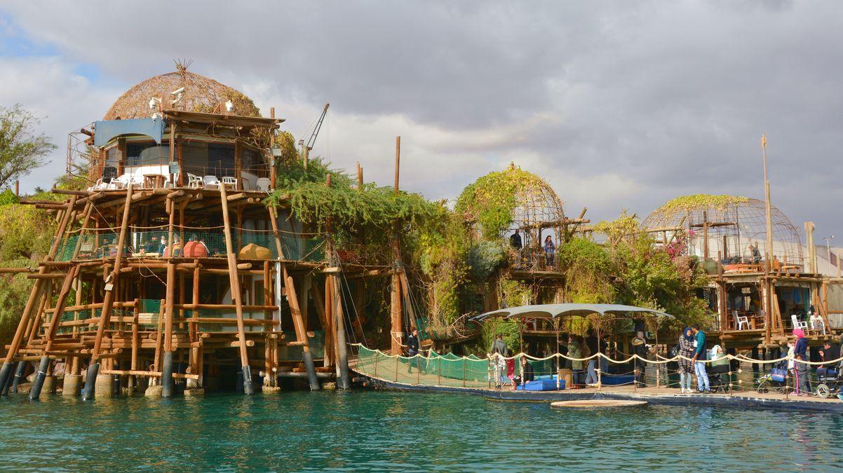 Dolphins reef Eilat