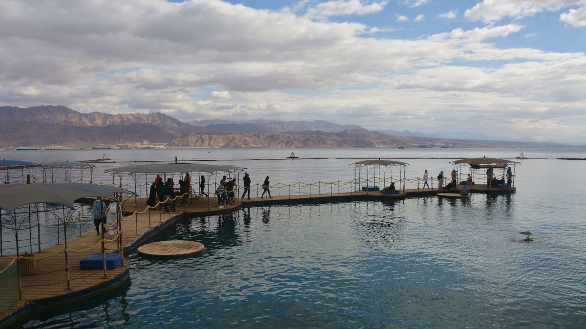 Eilat Israel delfiner