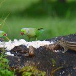 Djur i Sri Lanka – som safari överallt