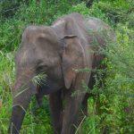 15 saker att tänka på inför din Sri lanka-resa
