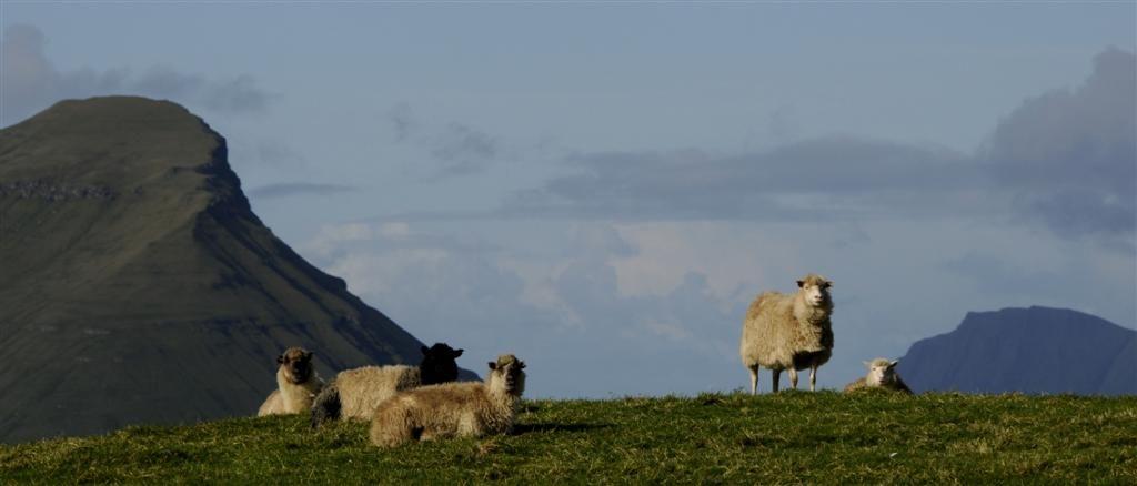 Färöarna får