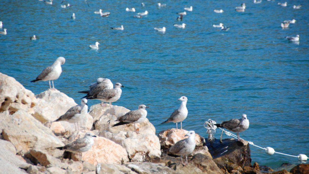 Fågelliv Kroatien