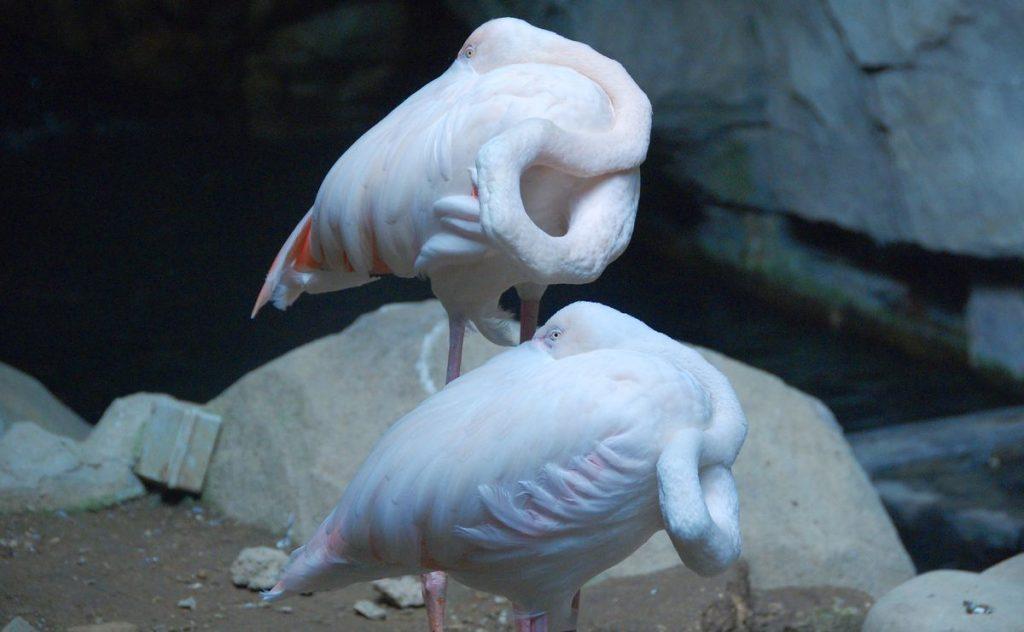 Fåglar Underwater world