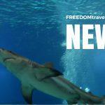 Sol & bad, mini breaks och världens största undervattensrestaurang