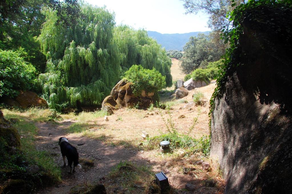"""Vår """"guide"""" (okänd hund) visade vägen genom området"""