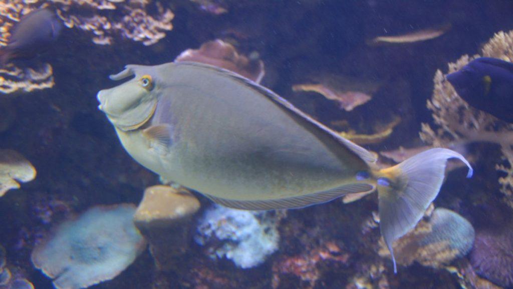 Fiskar Röda havet