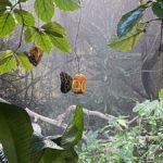 Fjärilshuset i Haga – tropiskt klimat, fjärilar och hajar