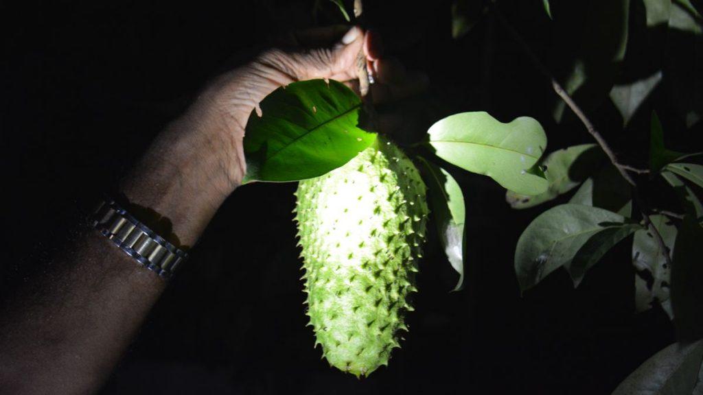 Exotiskt frukt, Negombo i Sri Lanka