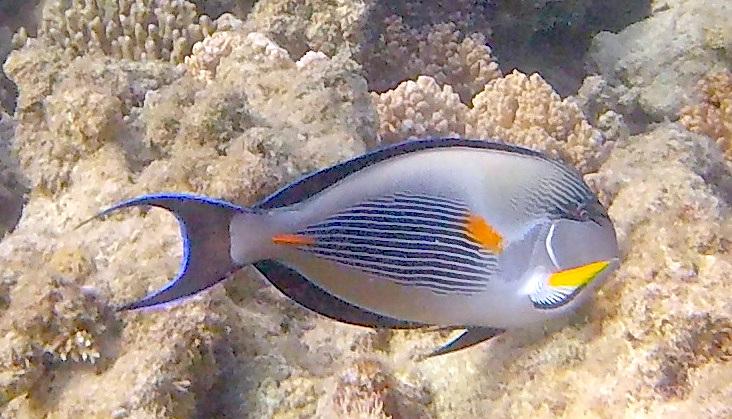 Göra i Hurghada - Grand Aquarium