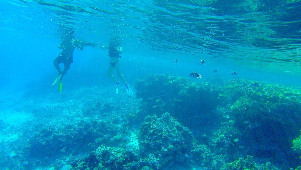 Snorkla i Sharm el Sheikh
