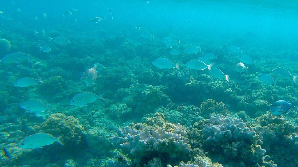 Snorkling vid Zeytouna Beach Island