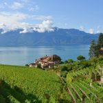 Vinregionen Lavaux i Schweiz – och ett besök på Chaplin's World