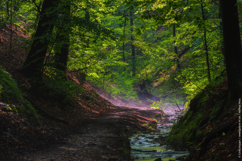 Naturområden i Tyskland - Thuringer Wald