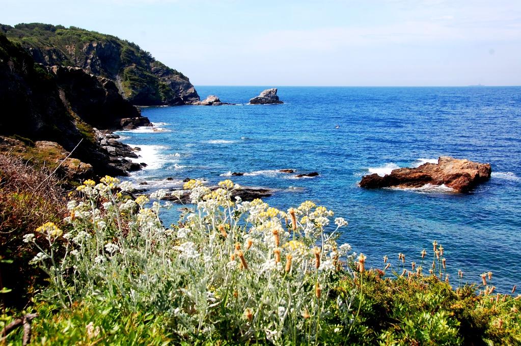 Väster och blommor frodas och växer överallt. Frankrike och skärgården.