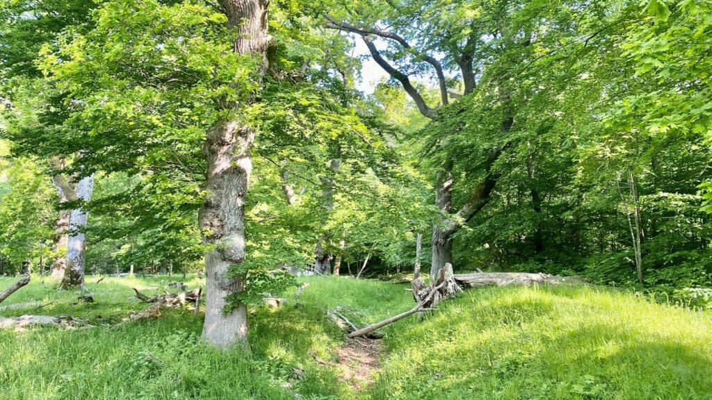 Dalby Söderskog nationalpark - Europas minsta nationalpark