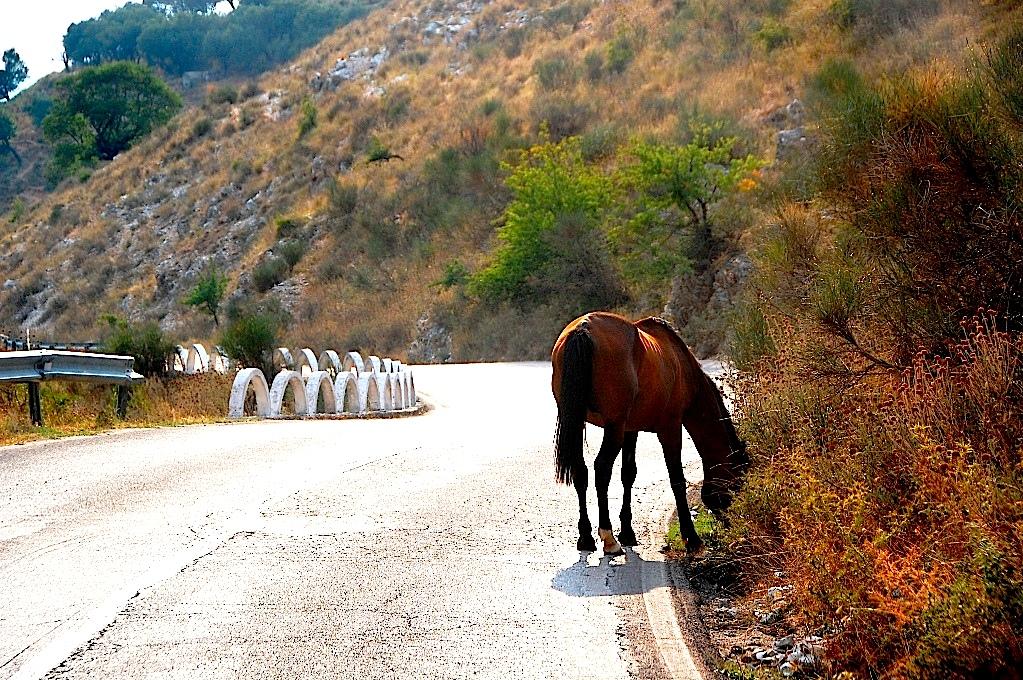 Albanien och vägar
